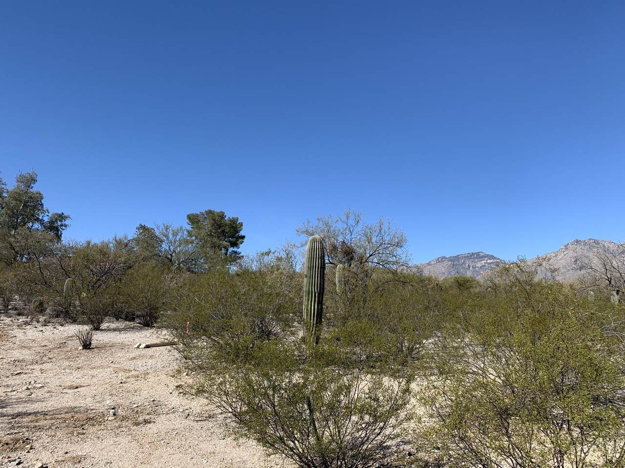 9055 Bear Canyon Place - Photo 1