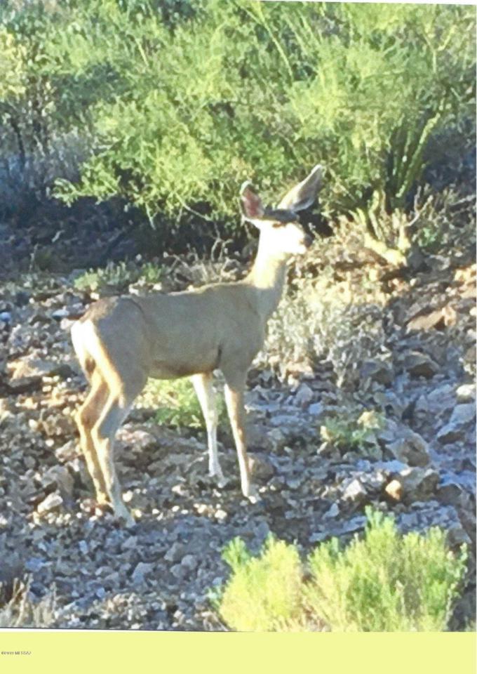 4580 Bear Canyon Road - Photo 1
