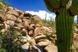 1305 Tortolita Mountain Circle - Photo 1