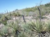 0 Salcido Ranch Road - Photo 6