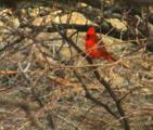 Lot 205 Kingbird Trail - Photo 14