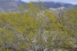 4580 Bear Canyon Road - Photo 11