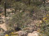 7358 Secret Canyon Drive - Photo 3
