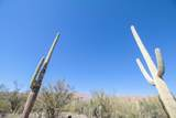 4902 Soldier Trail - Photo 8