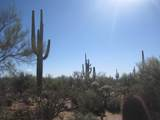 Crested Saguaro - Photo 5