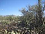 Crested Saguaro - Photo 6