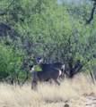 27425 Old Mesquite Way - Photo 11