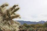 Golder Ranch Drive - Photo 7