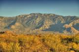 14231 Giant Saguaro Place - Photo 22