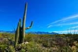 916 Tortolita Mountain Circle - Photo 15