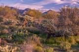 14161 Giant Saguaro Place - Photo 5