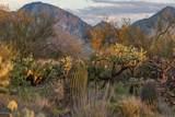 14161 Giant Saguaro Place - Photo 7