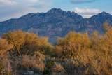 14161 Giant Saguaro Place - Photo 8