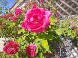 9516 Rashad Way - Photo 20