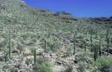 13768 Cactus Valley Court - Photo 13