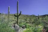 13768 Cactus Valley Court - Photo 2