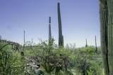 13768 Cactus Valley Court - Photo 9
