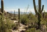 4425 Cush Canyon Loop - Photo 3