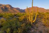 1496 Canyon Spring Court - Photo 35