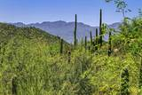 4550 Cush Canyon Loop - Photo 2