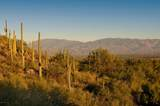 6412 Desert Wind Circle - Photo 10
