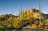 6412 Desert Wind Circle - Photo 5