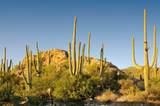 6412 Desert Wind Circle - Photo 6