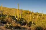 6412 Desert Wind Circle - Photo 8