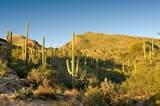 6412 Desert Wind Circle - Photo 9