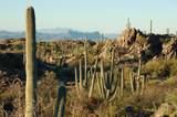 1178 Tortolita Mountain Circle - Photo 6