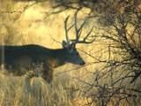 49 Old Javelina Trail - Photo 12