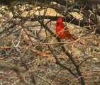 49 Old Javelina Trail - Photo 14