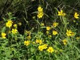 49 Old Javelina Trail - Photo 23