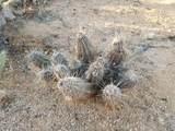 Ocotillo Ranches - Photo 4