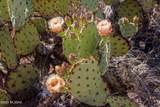 4080 Saguaro Path Court - Photo 20