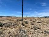21 Cayuse Trail - Photo 3