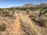 Cactus Wren Road - Photo 4