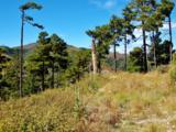 12717 Upper Loma Linda Road - Photo 13