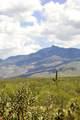8233 Diamond H Ranch Place - Photo 2