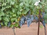 78 Harvest Drive - Photo 37