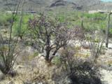 Gibson Trail - Photo 24