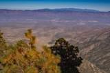 12825 Upper Loma Linda Road - Photo 43