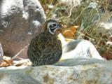 00 Owls Butte Trail - Photo 3