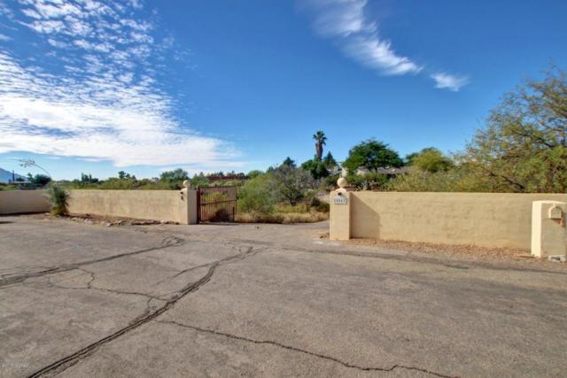 16061 N Sotol Avenue, Tucson, AZ 85739 (#21729950) :: Long Realty - The Vallee Gold Team