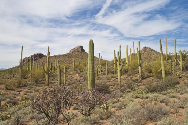 0 E Hopewell Drive, Marana, AZ 85658 (#21805288) :: Long Realty Company