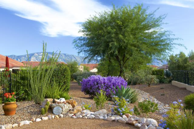60386 E Ankole Drive, Oracle, AZ 85623 (#21828139) :: Gateway Partners at Realty Executives Tucson Elite