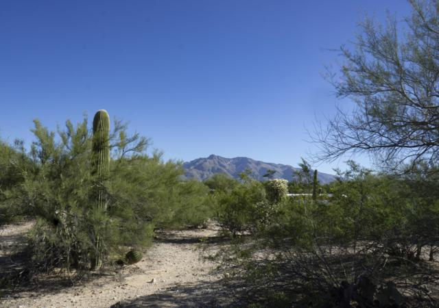 5461 N Northern Hills Drive #53, Tucson, AZ 85704 (#21829793) :: Long Realty Company