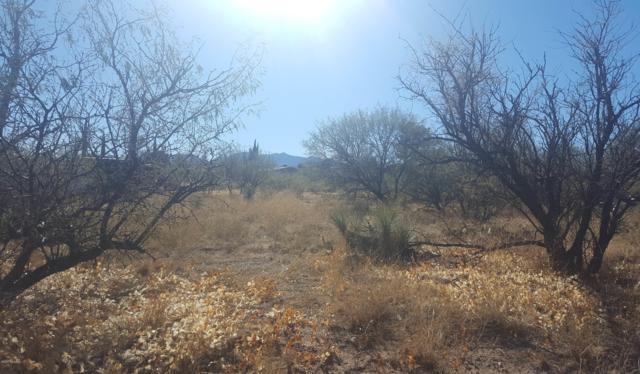 3171 W Mirasol Drive #381, Benson, AZ 85602 (#21830004) :: The Josh Berkley Team