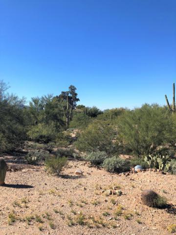1071 W Panorama Road, Tucson, AZ 85704 (#21830459) :: Keller Williams