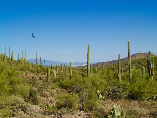 4040 W Gates Creek Court #20, Tucson, AZ 85745 (#21831343) :: Long Realty Company